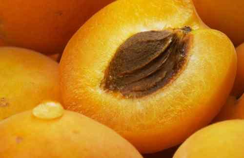 Apricot_Pits