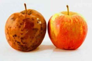 Rotten_Apple_Spoiled_Food