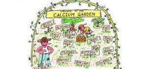 Calcium_Vegan