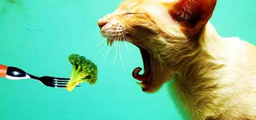 Hate Vegetables