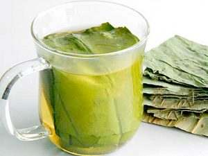 - Lotus Leaves Health Benefits and Weight Loss Effectiveness